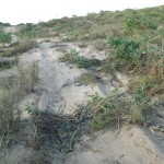 Vegetation and dune damage near James Price Point