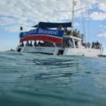 concert boat2 500