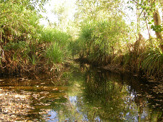 Pandanus lined watercourse in the central Kimberley.