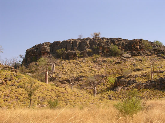 Spinifex and tussock grass are dominant ground cover in the region.